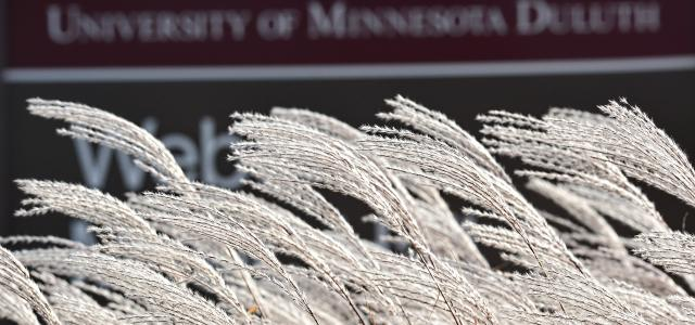 Frost covered wheat grass in front of UMD sign.